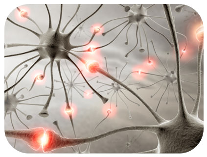 Neurons - NLP Training Course Materials - Neuro Linguistic Programming